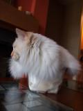 Cat in a Box Milo