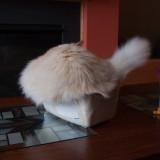 Cat in a Box Milo 5.jpg