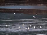 River Melt on the Minnesota
