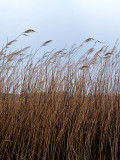 The Coming of a Storm n Grasses rp.jpg