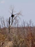 Tree House for Eagles.jpg