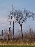 Trees at Carlos Avery_1 rp.jpg