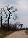 Trees at Carlos Avery_2 rp.jpg