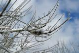 A Nest on Ice