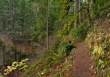 Weisendanger Falls Trail 1280 .jpg