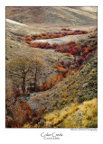 Color Creek.jpg (NFS)
