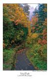 Vivid Path.jpg