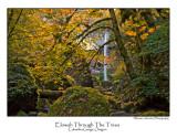 Elowah Through The Trees Horizontal.jpg