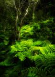 Fern forest