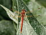 Dragonfly 5874