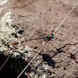Dragonfly 5959