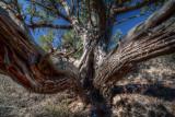 Strange Tree [HDR]