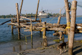 Beach Dog, Kochi