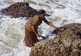 Woman Collecting Mussels