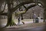 The tree and the dog.