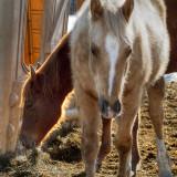 Horses 2010