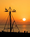 Heron's Cradle - Adaptive Habitat