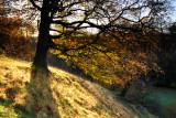 Autumnal Studley Royal  09_DSC_7891