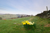 Nidderdale Spring  10_DSC_0551