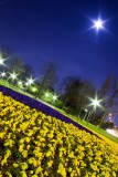 Moon and flowers