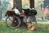 A dog in Parco Sempione