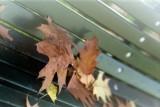 It' s autumn in Milan
