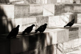 Pigeons on Monument to Pertini