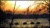 Frozen fields