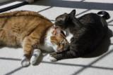 _MG_1478 It's Love!