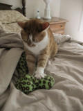 IMG_6120 Kneading Ricky's Toy
