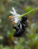 P1010320 Very Wet Bee