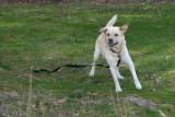 RP1030946 Polo on the Run