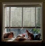 P1040952 Sphynx Window Scene