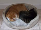 DSCF6318 Sharing a Warm Pillow