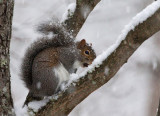 First Snow Squirrel and Recipe