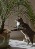 _MG_0062 Jungle Cat