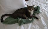 P1070058 Louie - that's the last towel...