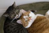_MG_1516 Kitty Loves