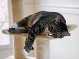 _MG_9943 Catnip High