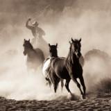Hooves & Dust 27 Browntone