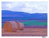 Autumn Fields.jpg