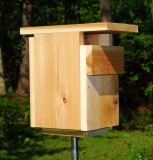 Bluebird House Design