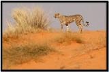 Kalahari N.P. Sudáfrica Ago 2007
