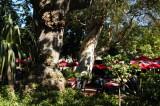Shady restaurant, Company's Garden, Cape Town