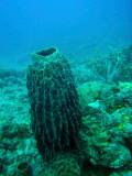 Sponge, Lusong Gunboat