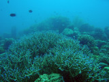 Coral reef around the Lusong Gunboat