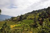 Punakha Region