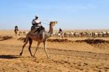 Sudan - Libyan Desert