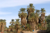 Palm trees along the Nile near Old Dongola