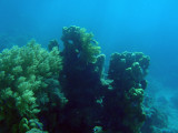 Sudan Red Sea Resort - local reef, Abu Adila